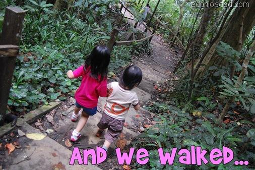 Treetop trail