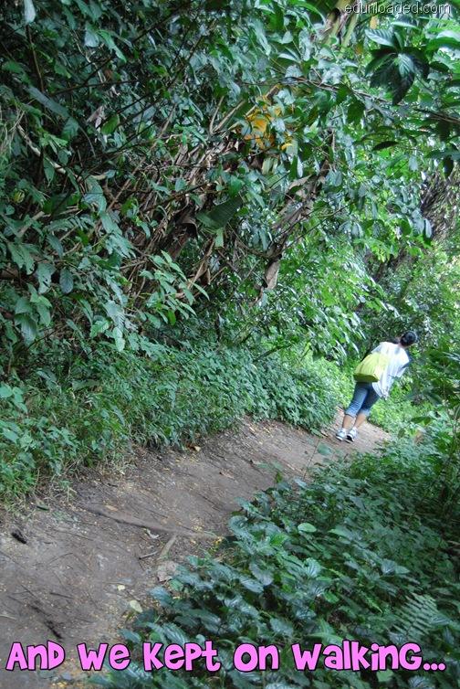 treetop trail 3